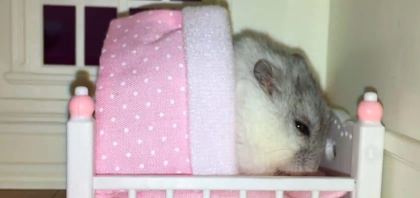material de cama para hámster