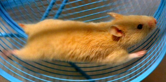 rueda para hamster precio