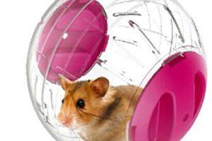 Mejores ofertas bolas para hamsters