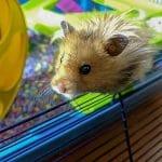 Precio hamsters