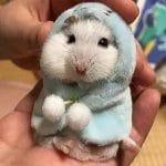 Ropas de hamster