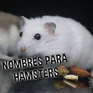 Nombres para hamsters