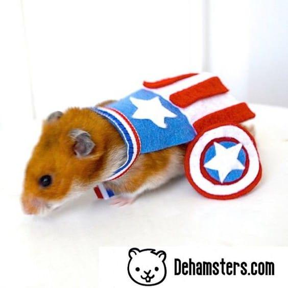 Disfraz para hámsters de capitan america