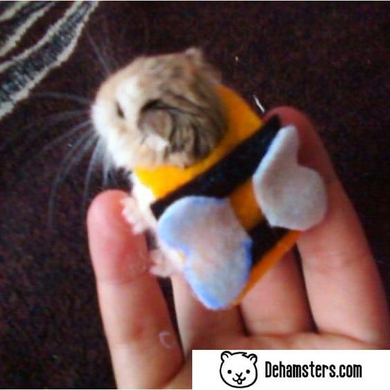 Hamster con ropa