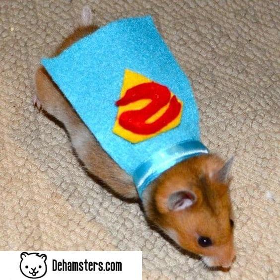 Ropita para hamsters