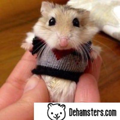 Sueter para hamster