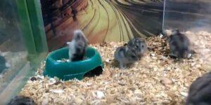 Tiendas de hamsters
