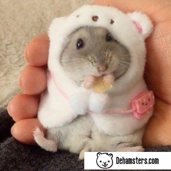 Trajes para hamsters