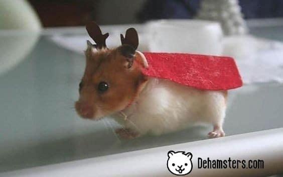Vestidos para hamster